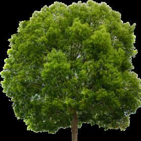 Central Coast Tree Removal