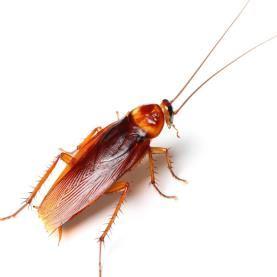 Enviro Guard Pest Management